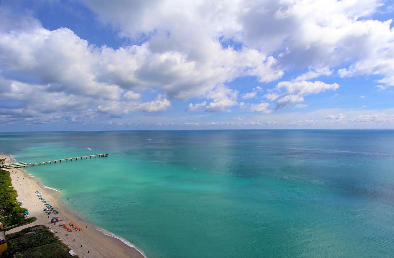 Marine life of Florida