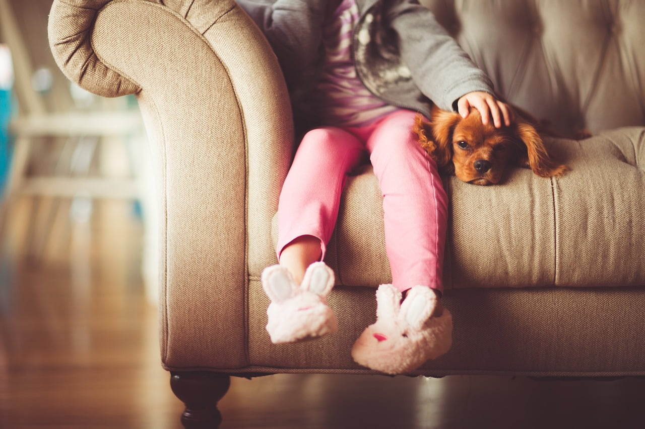 kid and pet friendly furniture