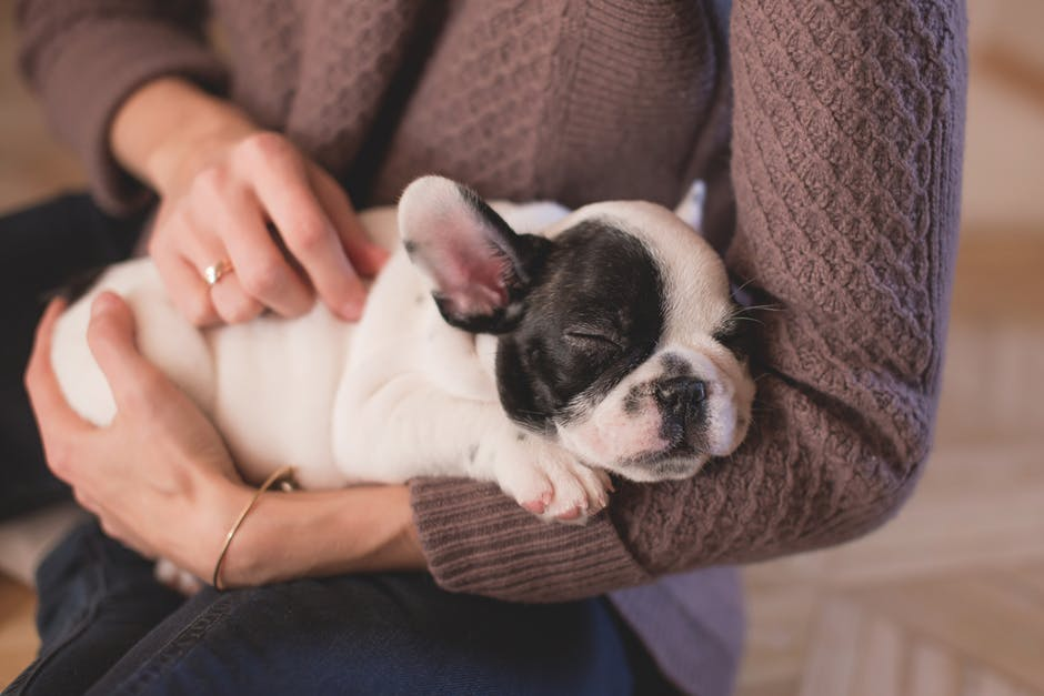 5. Canine Massage therapy