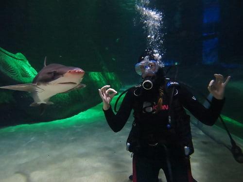 Heckin' Sharks