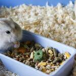 pet feeders