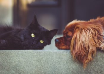 CBD Oil Uses for Pets