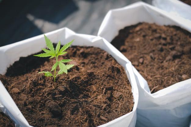 growing methods