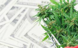 Ideas for Buying Marijuana