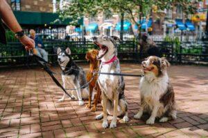 2. Pet-friendly rules